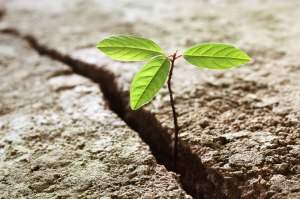 Historical-Perspective-When-Adversity-breeds-Resilience-top-I.J.-Singh