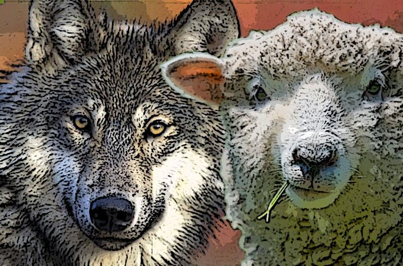 Are You a Wolf or a Sheep?